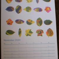 november21